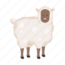 animal, farm, pet, sheep
