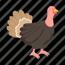 animal, bird, farm, pet, turkey