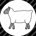 agriculture, animal, farm, sheep