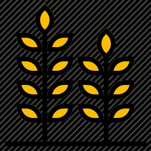 grain, rice, wheat icon