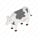 animal, cow, dairy, domestic, farm, isometric, livestock icon