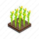 floral, flower, garden, grow, isometric, plant, tulip icon