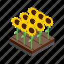 flower, green, grow, isometric, summer, sunflower, yellow icon