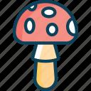 forest, mushroom, mushrooms, amanita, fungi