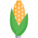 agriculture, corn, farming, food, vegetable
