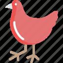 bird, chicken, domestic bird, farm, hen
