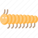 butterfly, catterpillar, crawl, insect, worm