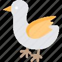 bird, chicken, domestic bird, farm, poultry