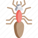 ant, ants, bugs, insect, worker ant icon