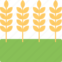 barley ears, bunch of wheat, emmer, oats, rye, whole grain icon