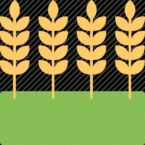 barley ears, bunch of wheat, emmer, oats, rye, whole grain icon