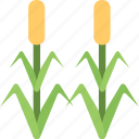 agriculture, corn field, corn trees, farming, maize, organic plants icon