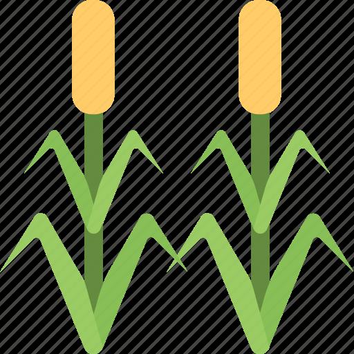 agriculture, corn field, corn trees, farming, maize, organic plants icon