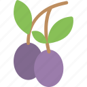 farming concept, fruit, healthy fruit, plum fruit, plum fruit twig icon