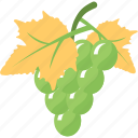agriculture, food, fruit farming, grapes bunch, healthy diet icon
