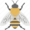 animal, cartoon bee, honey bee, insect, worker bee icon