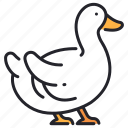 agriculture, animal, beak, duck, duckling, farm, feather icon