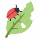 agriculture, bug, garden, insect, leaf, pest, plant icon