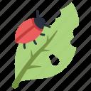 agriculture, bug, garden, insect, leaf, pest, plant