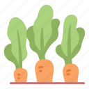 carrot, food, health, healthy, plant, vegan, vegetable