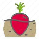 food, garden, groceries, leaves, soil, turnip, vegetable icon