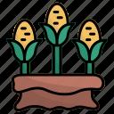corn, harvest, farming, farm, food, organic, sack