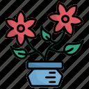 flower, flower pot, plant, botanic, gardening, garden, pot