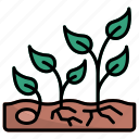 growth, seed, plant, gardening, garden, sprout, farm