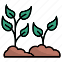 plant, green, flora, leaves, spring, mature, sprout
