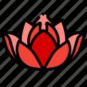 flower, lotus, center, spa