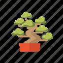 asia, bonsai, feng, shui, tree