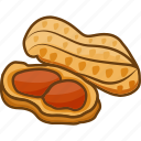 dry fruits, dry fruits icon, food, legume, peanut icon