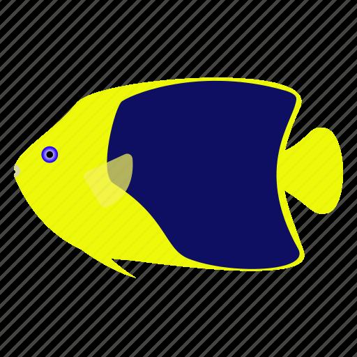 angelfish, beauty, fish, pet, rock icon