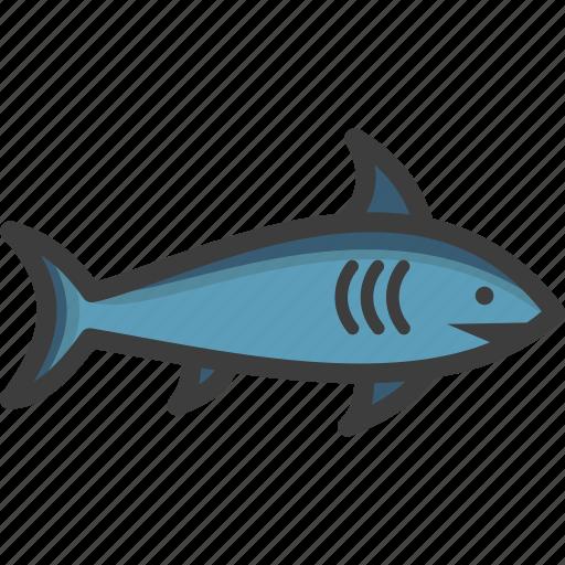 blue, grey reef, mako, shark icon
