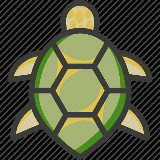 green, loggerhead, marine, sea, turtle icon