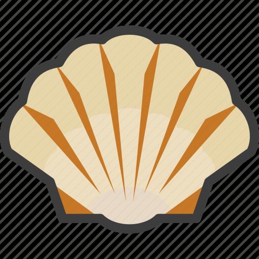 sea, seashell, shell, shellfish icon