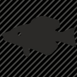 fish, fishing, hathery, hunter, predator, river icon