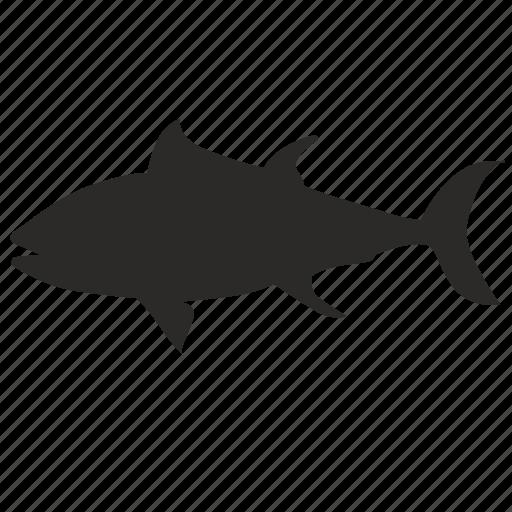 fish, oily, predator, river icon