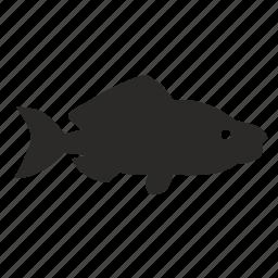 fish, pink, salmon, sea, type icon