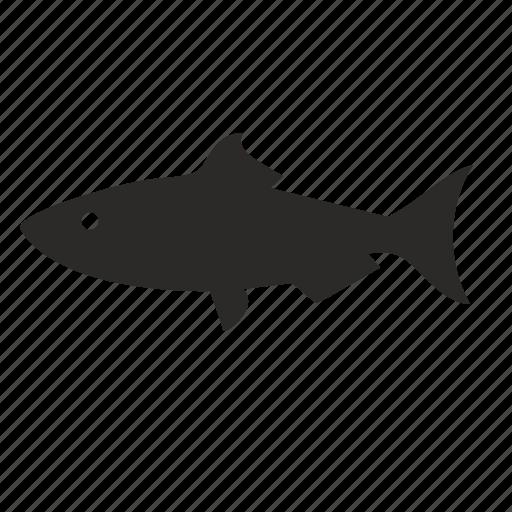 fish, hunter, predator, river icon