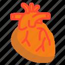 blood, heart, medical, organ, vital icon