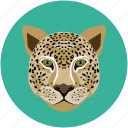 animal, tiger, tiger face, wild animal icon
