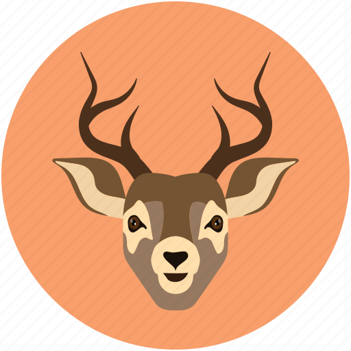 animal, christmas, deer, deer baby, hoofed grazing, reindeer icon