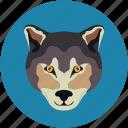 fox, fox face, wolf, wolf face