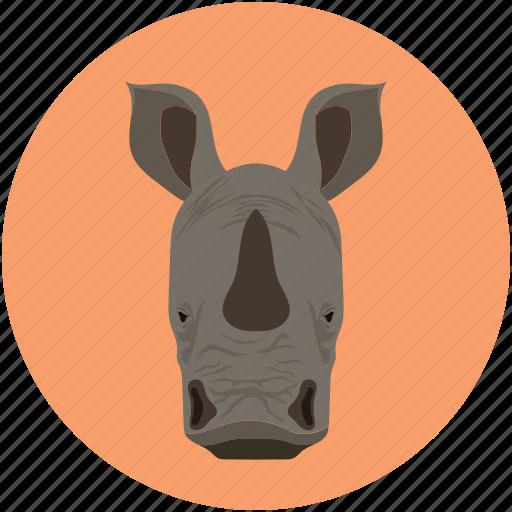 cow, rhinoceros, rhinoceros rhino, unicorn icon