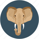 animal face, big elephant, elephant, elephant face icon