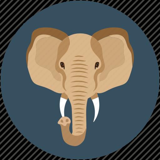 animal face, big elephant, elephant, elephant face icon