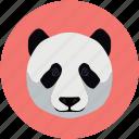 bear face, panda face, panda, bear