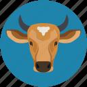 buffalo, buffalo face, cape, zoo icon