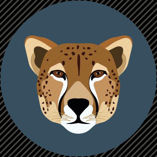 carnivore, tiger, tiger face, wild animal icon